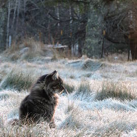 Sarah Burrin - Gizmo Chillin on a Frosty Morning