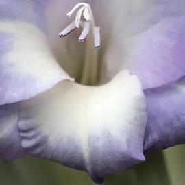 Jennie Marie Schell - Gladiola Flower Lavender