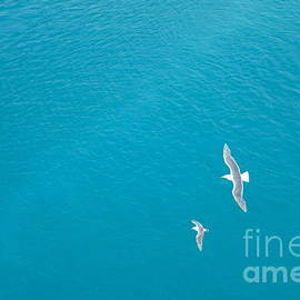 Jacqueline Athmann - Gliding Seagulls