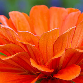 Lindley Johnson - Glorious Orange