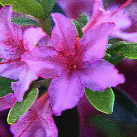 Barbara Dean - Glorious Pink Azaleas