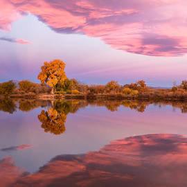 Lois Lake - Glorious Pink Sunrise L12-3-0018