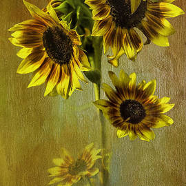 Diane Schuster - Glorious Sunflowers