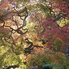 Rick Todaro - Glorious tree in the Arboretum