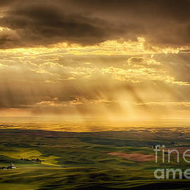 Priscilla Burgers - Glory Rays on the Palouse