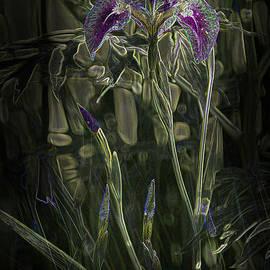 Penny Lisowski - Glowing Alaskan Irises