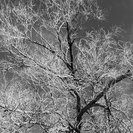 Denise Dube - Glowing Branches