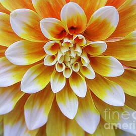 Photographic Art and Design by Dora Sofia Caputo - Glowing Dahlia