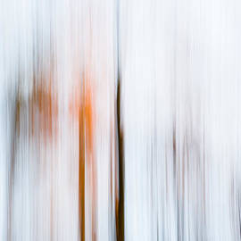 Thomas Joekel - Glowing in the silent forest