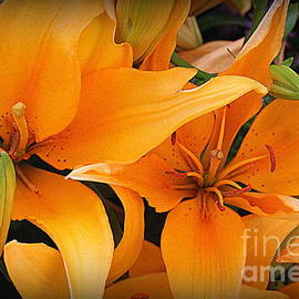 Photographic Art and Design by Dora Sofia Caputo - Glowing Lilies