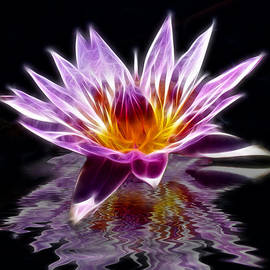 Shane Bechler - Glowing Lilly Flower