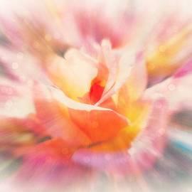 Lilia D - Glowing Rose fantasy 2