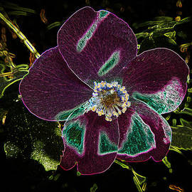 Penny Lisowski - Glowing Wild Alaskan Rose 3