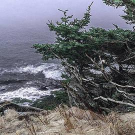 Marty Saccone - Gnarled Tree Overlook