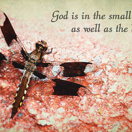 Trina  Ansel - God is in the Small Things