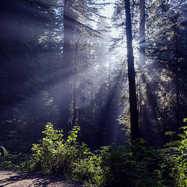 Vishwanath Bhat - God Rays through the fog