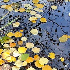Karon Melillo DeVega - golden Aspen leaves in the creek