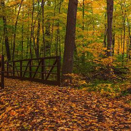 Lindley Johnson - Golden Autumn