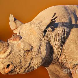 Hermanus A Alberts - Golden Black Rhino Bull