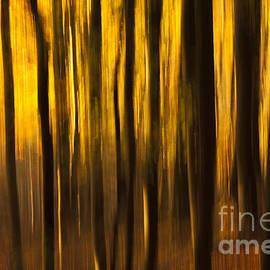 Anne Gilbert - Golden Blur