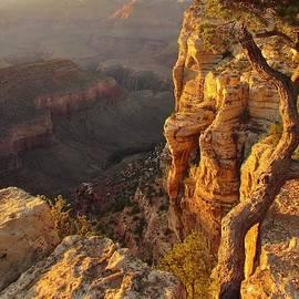 Mo Barton - Golden Canyon Morning Light