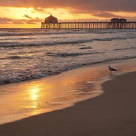 Tuan Le - Golden Coast