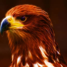 Chris Thaxter - Golden Eagle Eye Fractalius