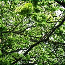 Joan-Violet Stretch - Golden Elm Blossoms Bordered