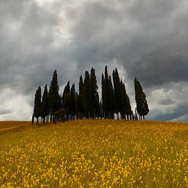Jaroslaw Blaminsky - Golden fields and cypresses