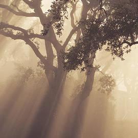 Zak Collins - Golden Fog