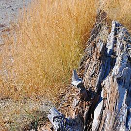 Connie Fox - Golden Grass