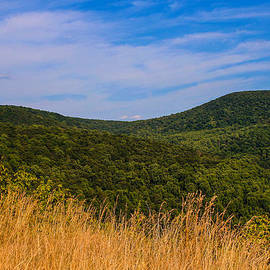 Rachel Cohen - Golden Grass in the Blue Ridge