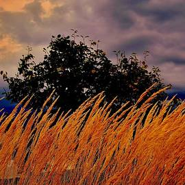 Rick Todaro - Golden Grasses