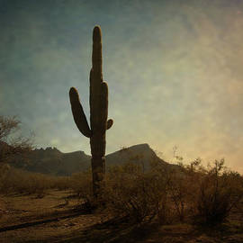 Lucinda Walter - Golden Hour in the Desert