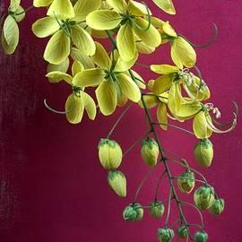Chrystyne Novack - Golden Lantern