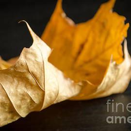 Andrea Anderegg  - Golden Leaf
