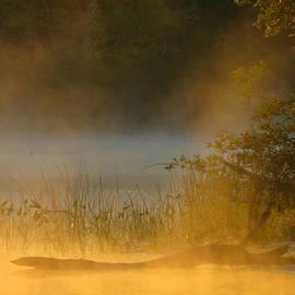 Dianne Cowen - Golden Mist Sunrise