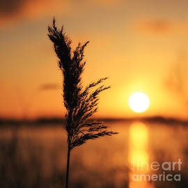 LHJB Photography - Golden morning