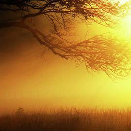 Douglas Stucky - Golden Rays