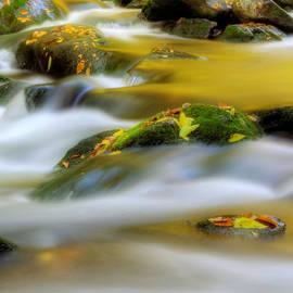 Greg Mimbs - Golden Reflections of Fall