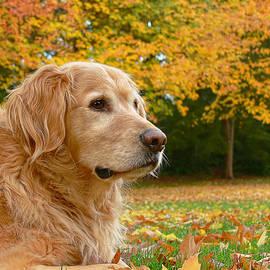 Jennie Marie Schell - Golden Retriever Dog Autumn Leaves