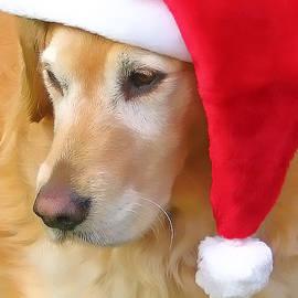 Jennie Marie Schell - Golden Retriever Dog in Santa Hat