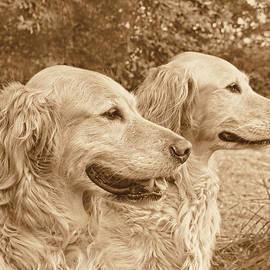 Jennie Marie Schell - Golden Retriever Dogs Sepia