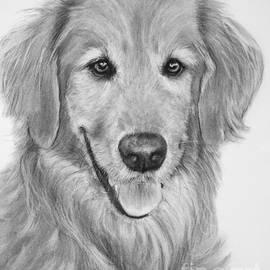 Kate Sumners - Golden Retriever Sketch