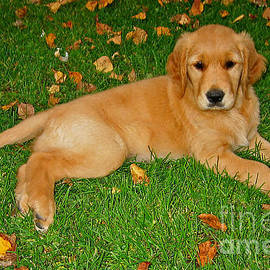 Teresa Zieba - Golden Retriever