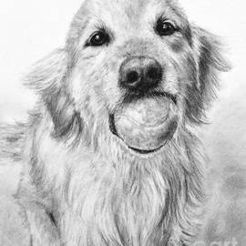 Kate Sumners - Golden Retriever with Ball