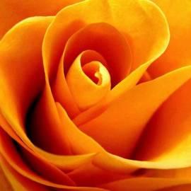 Rhonda Barrett - Golden Rose