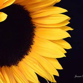 Jeannie Rhode Photography - Golden Sunflower No 3