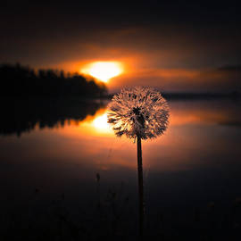 Silvijo Selman - Golden Sunrise