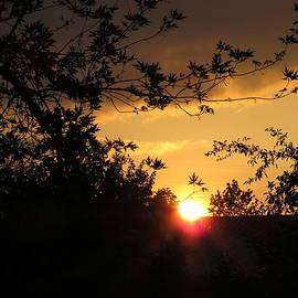 Elisabeth Ann - Golden Sunset